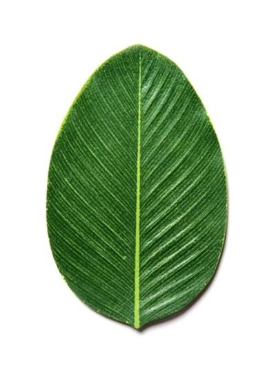 leaves coaster : 1