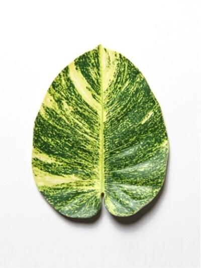 leaves coaster : 2