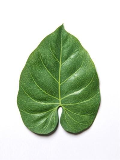 leaves coaster : 3