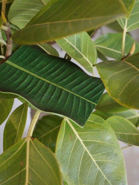 바나나잎 코스터 : banana leaf coaster