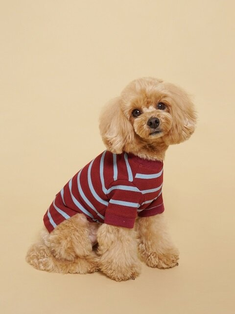 Fresh Stripe Tee-Shirt Bric