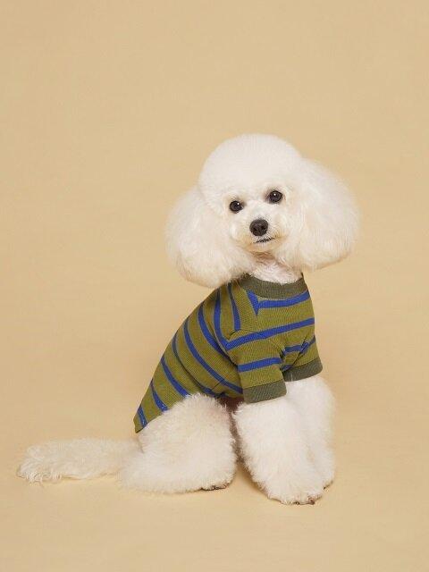 Fresh Stripe Tee-Shirt Khaki