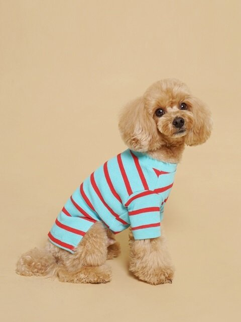 Fresh Stripe Tee-Shirt Aqua