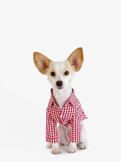 강아지 셔츠 - 레드