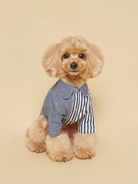 Coloration Stripe Shirt Bold Denim