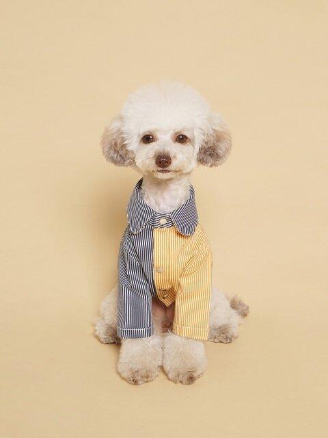 Coloration Stripe Shirt Mustard & Navy